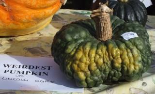 Lincoln Pumpkin Festival 12
